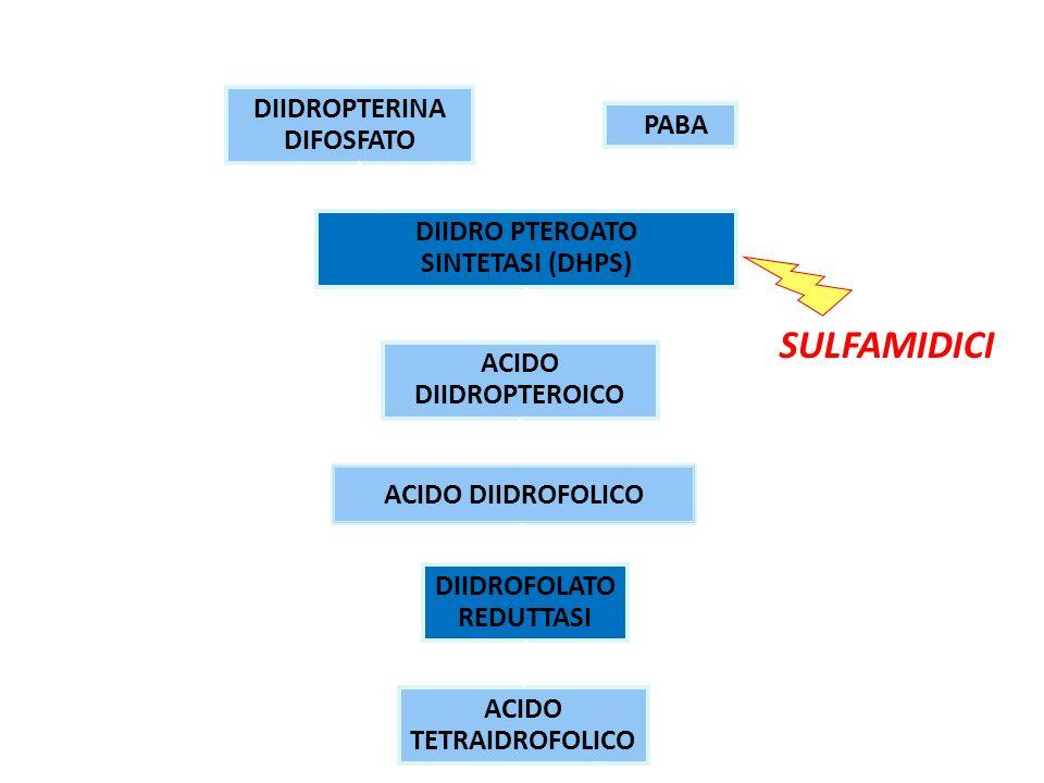 DIIDROPTERINA DIFOSFATO PABA DIIDRO PTEROATO SINTETASI (DHPS) ACIDO DIIDROPTEROICO DIIDROFOLATO REDUTTASI ACIDO TETRAIDROFOLICO SULFAMIDICI MECCANISMO DAZIONE ACIDO DIIDROFOLICO