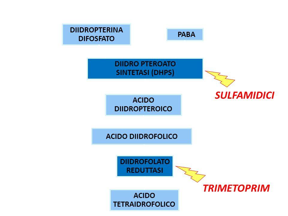 DIIDROPTERINA DIFOSFATO PABA DIIDRO PTEROATO SINTETASI (DHPS) ACIDO DIIDROPTEROICO DIIDROFOLATO REDUTTASI ACIDO TETRAIDROFOLICO SULFAMIDICI MECCANISMO DAZIONE ACIDO DIIDROFOLICO TRIMETOPRIM