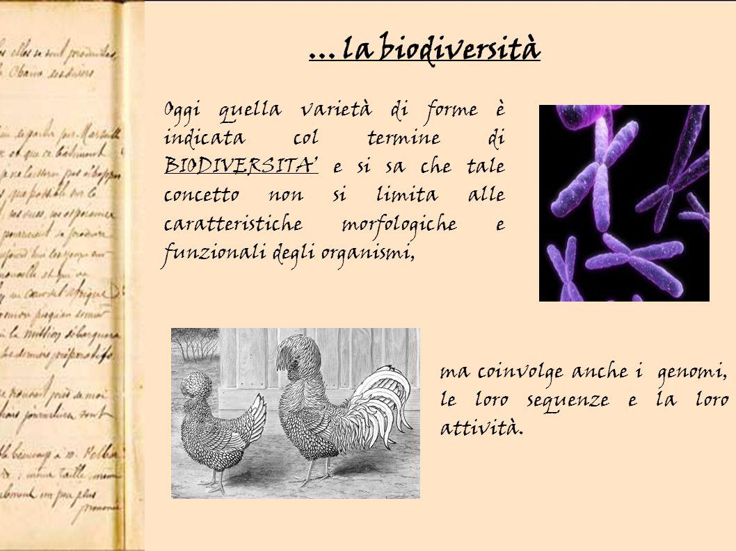 Oggi quella varietà di forme è indicata col termine di BIODIVERSITA e si sa che tale concetto non si limita alle caratteristiche morfologiche e funzionali degli organismi,...