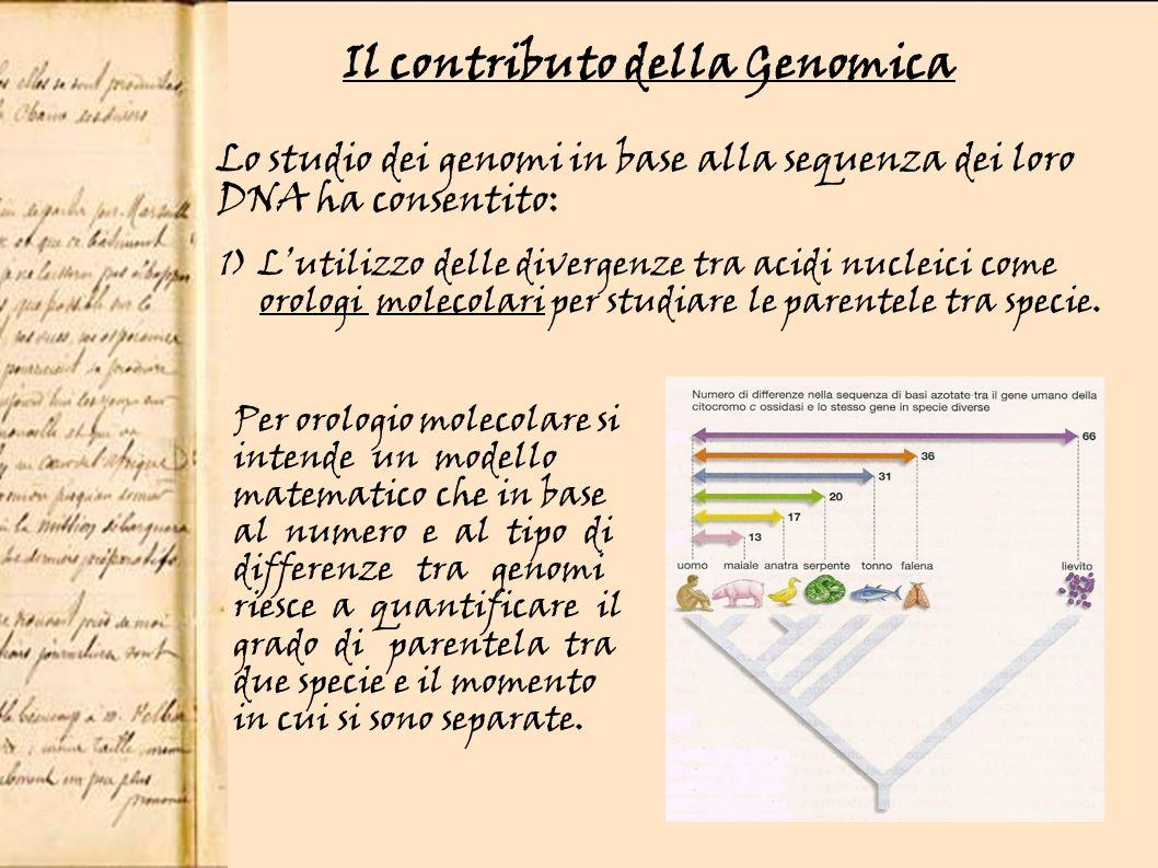 Il contributo della Genomica Lo studio dei genomi in base alla sequenza dei loro DNA ha consentito: 1) Lutilizzo delle divergenze tra acidi nucleici come orologi molecolari per studiare le parentele tra specie.