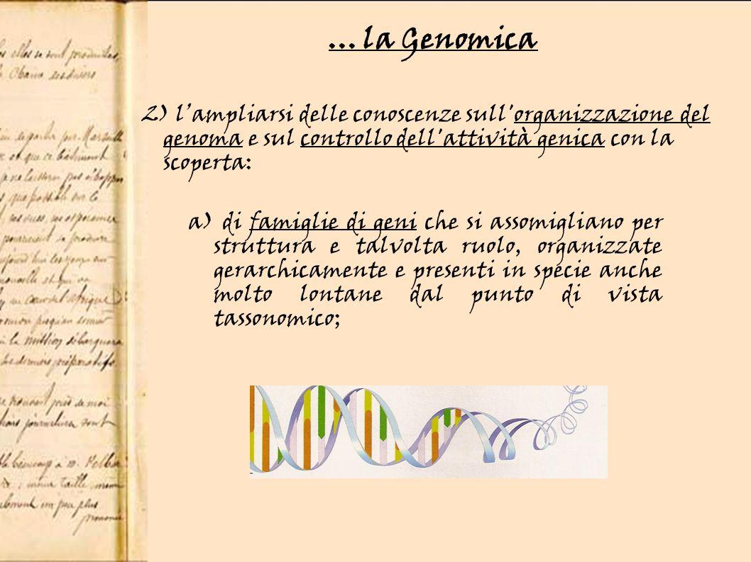 b) di geni che rivestono una diversa importanza rispetto ad altri, come ad esempio i Master Control Genes (geni regolatori di alto livello gerarchico) che regolano l attività di altri geni con meccanismi di attivazione o di disattivazione;...