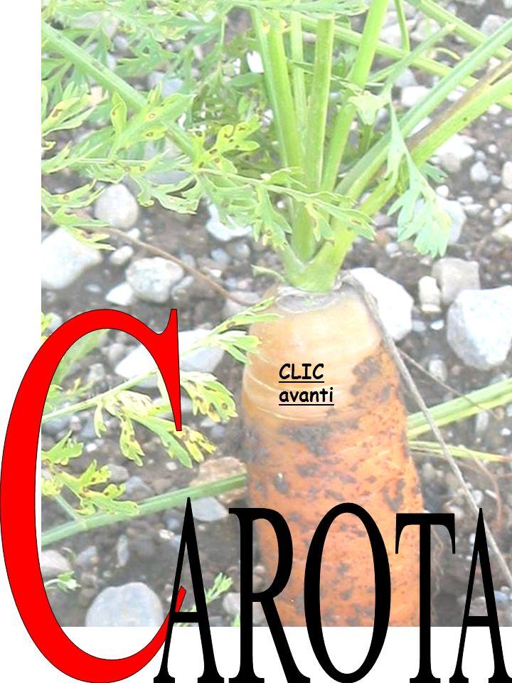 Qui in montagna si coltivano: Here in the mountains we grow: le patate i fagioli il granoturco i c.