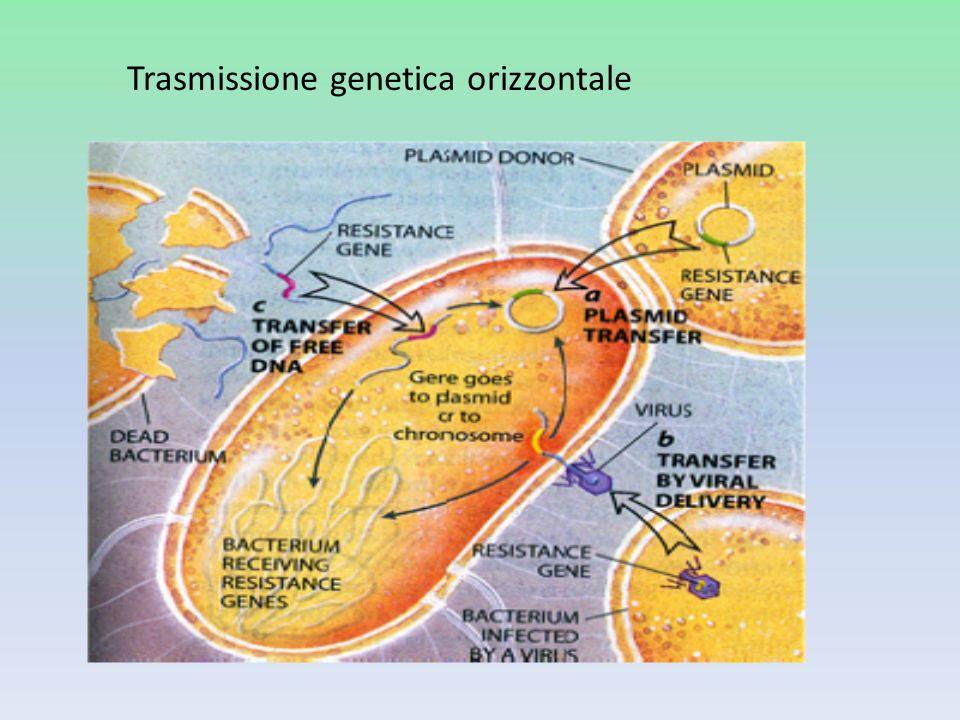 Trasmissione genetica orizzontale