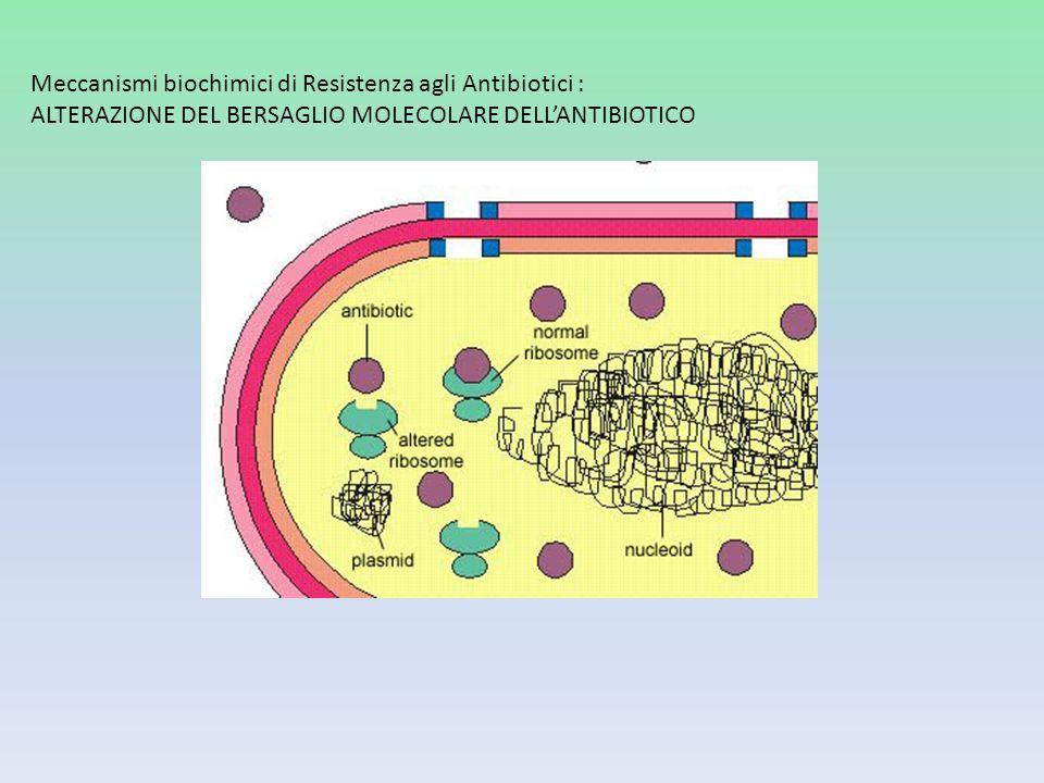 Meccanismi biochimici di Resistenza agli Antibiotici : ALTERAZIONE DEL BERSAGLIO MOLECOLARE DELLANTIBIOTICO