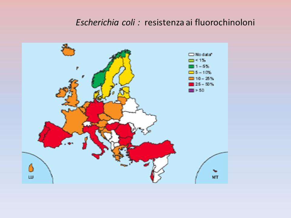Escherichia coli : resistenza ai fluorochinoloni