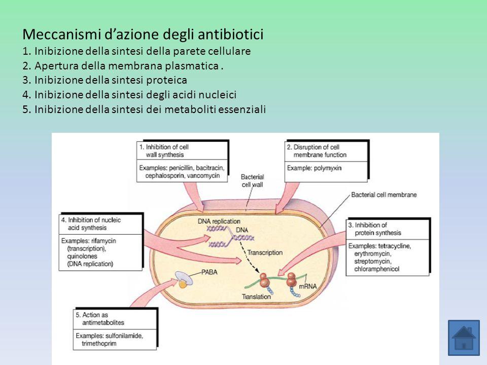 Meccanismi dazione degli antibiotici 1. Inibizione della sintesi della parete cellulare 2. Apertura della membrana plasmatica. 3. Inibizione della sin