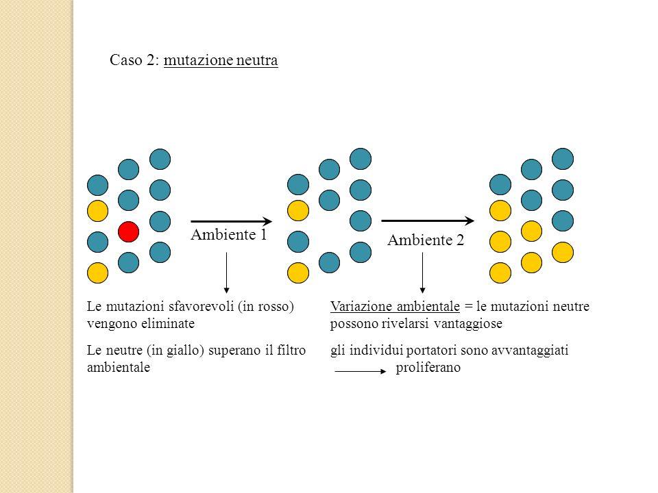 Caso 2: mutazione neutra Ambiente 1 Ambiente 2 Le mutazioni sfavorevoli (in rosso) vengono eliminate Le neutre (in giallo) superano il filtro ambienta