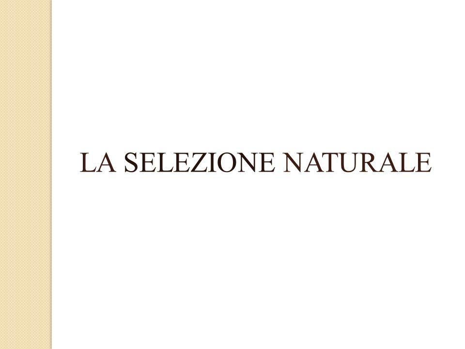 LA SELEZIONE NATURALE