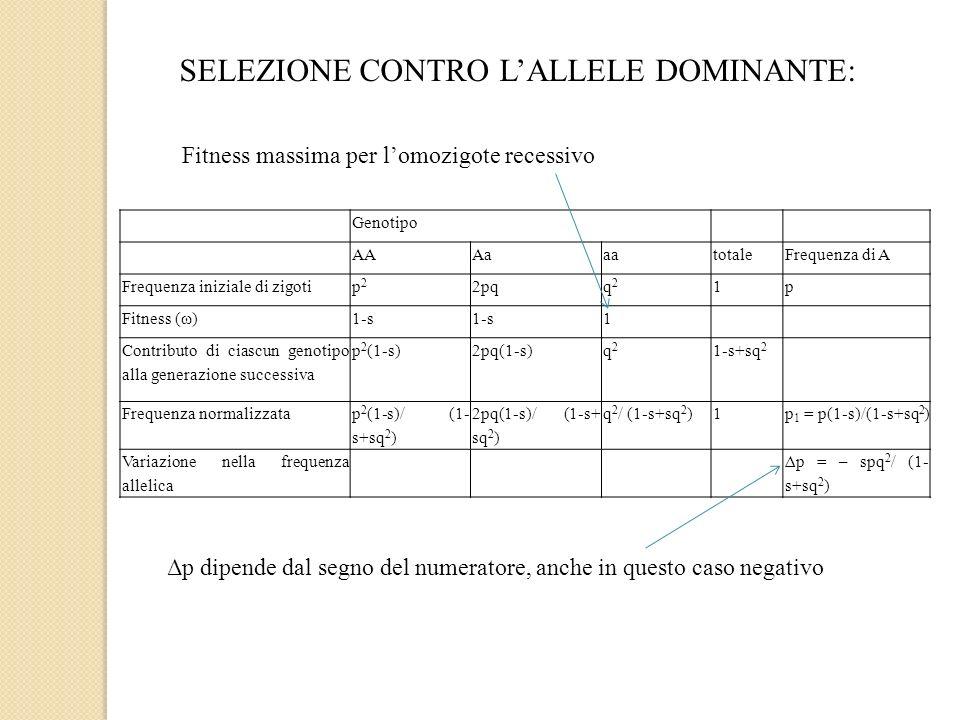 SELEZIONE CONTRO LALLELE DOMINANTE: Genotipo AAAaaatotaleFrequenza di A Frequenza iniziale di zigotip2p2 2pqq2q2 1p Fitness (ω)1-s 1 Contributo di cia