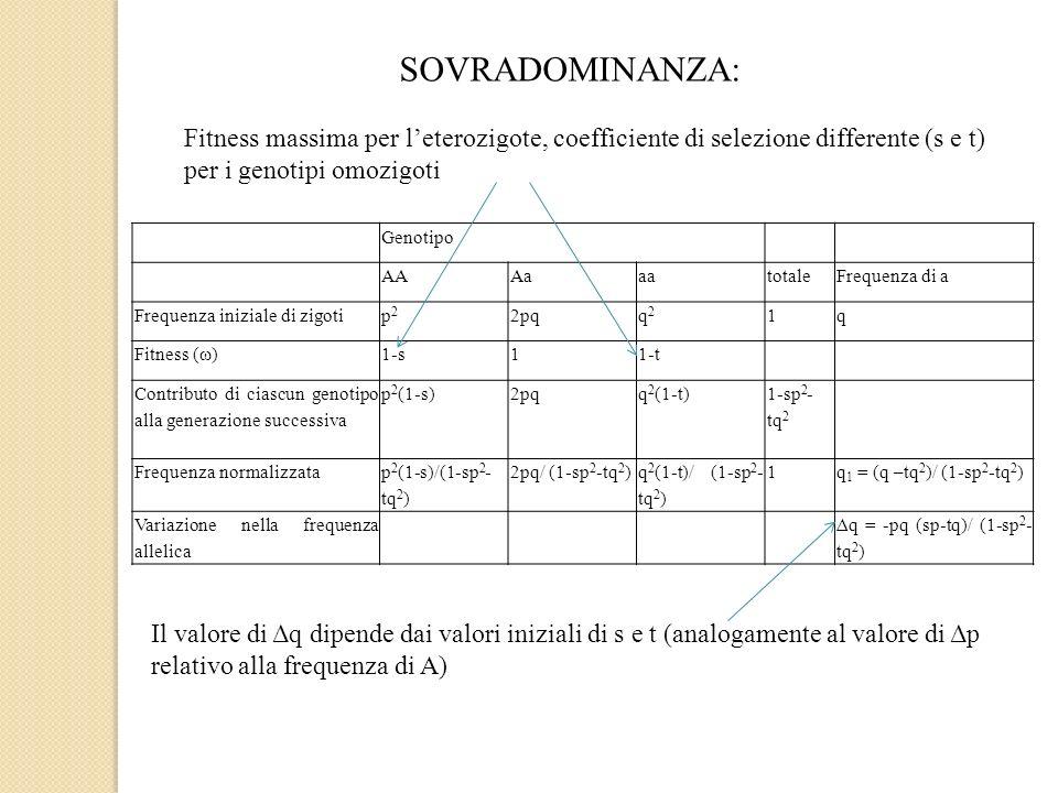 SOVRADOMINANZA: Genotipo AAAaaatotaleFrequenza di a Frequenza iniziale di zigotip2p2 2pqq2q2 1q Fitness (ω)1-s11-t Contributo di ciascun genotipo alla