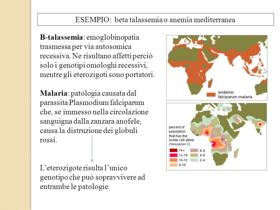 ESEMPIO: beta talassemia o anemia mediterranea Β-talassemia: emoglobinopatia trasmessa per via autosomica recessiva. Ne risultano affetti perciò solo