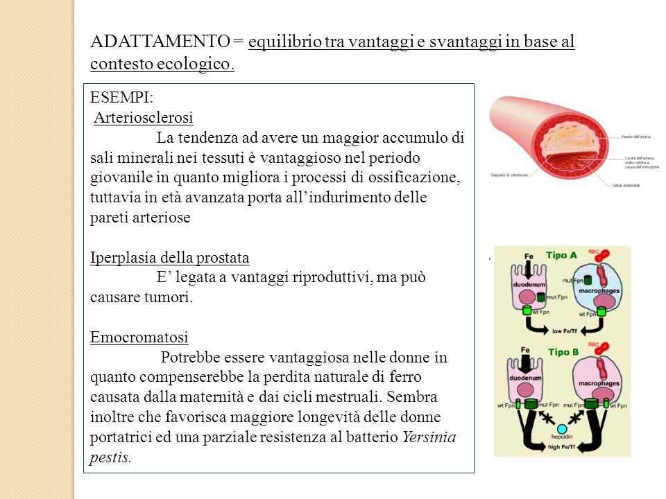 ADATTAMENTO = equilibrio tra vantaggi e svantaggi in base al contesto ecologico. ESEMPI: Arteriosclerosi La tendenza ad avere un maggior accumulo di s
