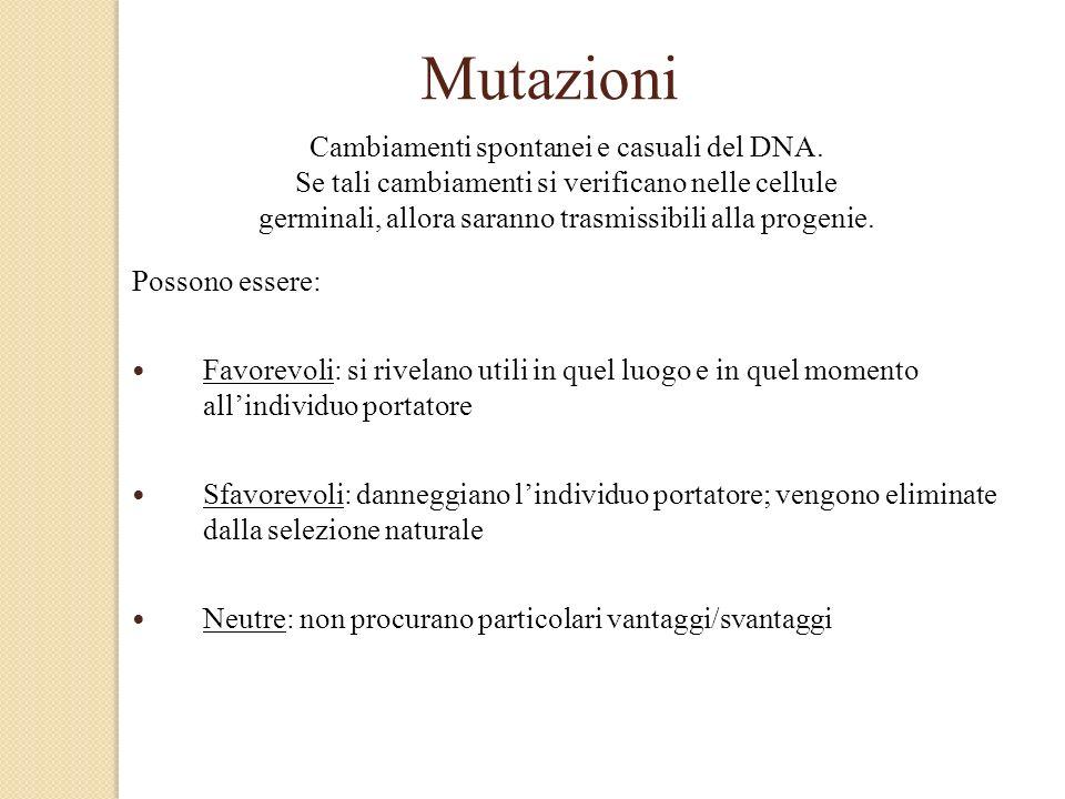 Mutazioni Possono essere: Favorevoli: si rivelano utili in quel luogo e in quel momento allindividuo portatore Sfavorevoli: danneggiano lindividuo por