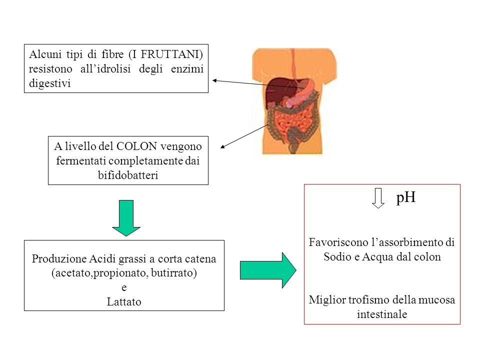 Alcuni tipi di fibre (I FRUTTANI) resistono allidrolisi degli enzimi digestivi A livello del COLON vengono fermentati completamente dai bifidobatteri