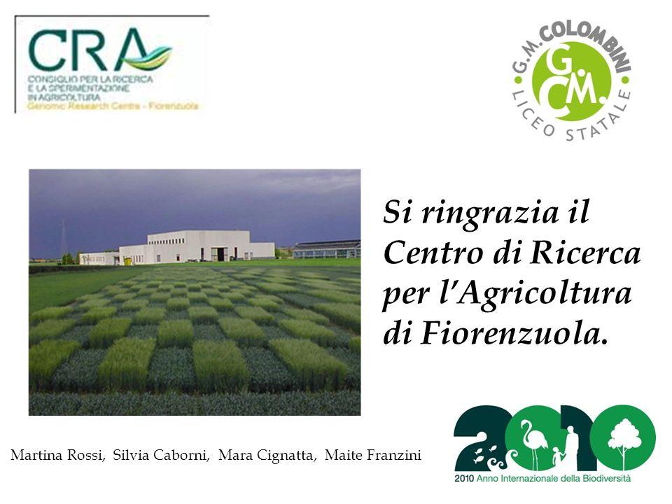 Si ringrazia il Centro di Ricerca per lAgricoltura di Fiorenzuola.