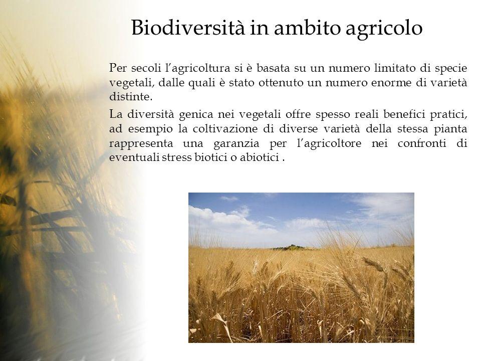 Biodiversità in ambito agricolo Per secoli lagricoltura si è basata su un numero limitato di specie vegetali, dalle quali è stato ottenuto un numero enorme di varietà distinte.