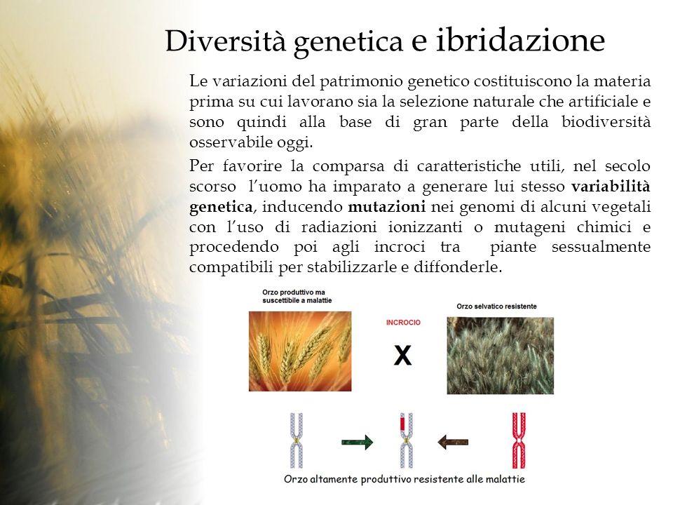 Diversità genetica e ibridazione Le variazioni del patrimonio genetico costituiscono la materia prima su cui lavorano sia la selezione naturale che artificiale e sono quindi alla base di gran parte della biodiversità osservabile oggi.