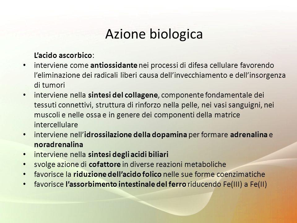 Azione biologica Lacido ascorbico: interviene come antiossidante nei processi di difesa cellulare favorendo leliminazione dei radicali liberi causa de