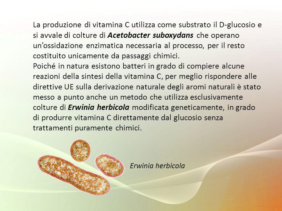 La produzione di vitamina C utilizza come substrato il D-glucosio e si avvale di colture di Acetobacter suboxydans che operano unossidazione enzimatic