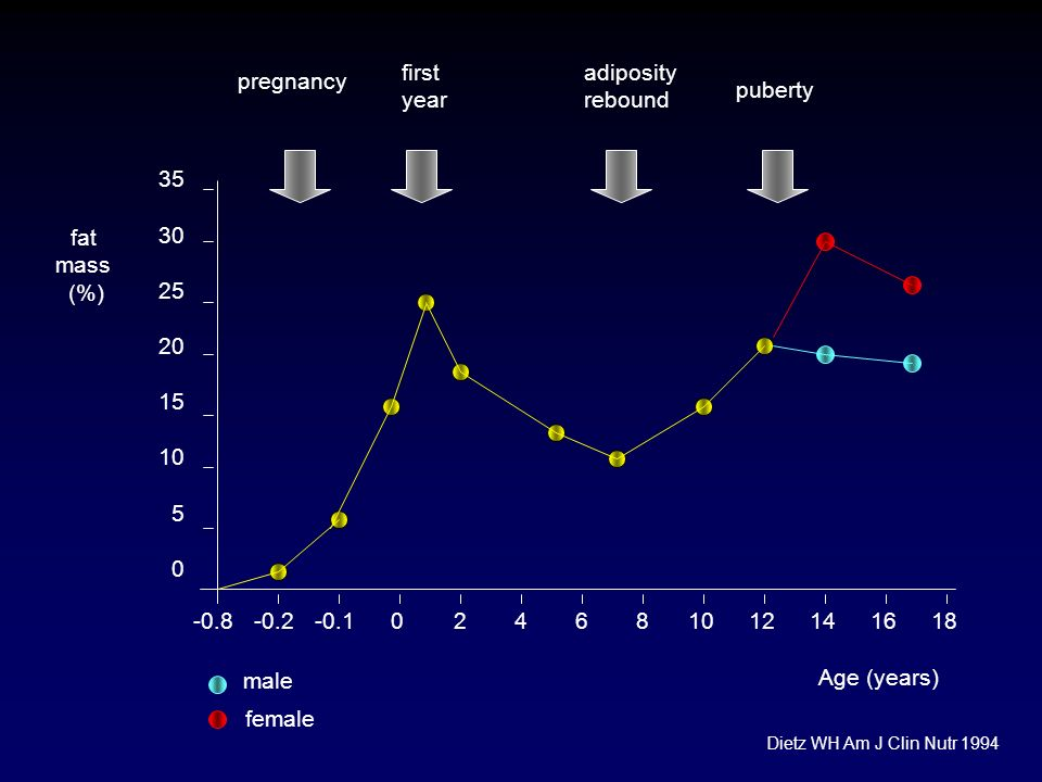 fat mass (%) 0-0.1-0.224681012141618 Age (years) 35 30 25 20 15 10 5 0 -0.8 male female pregnancy first year adiposity rebound puberty Dietz WH Am J C