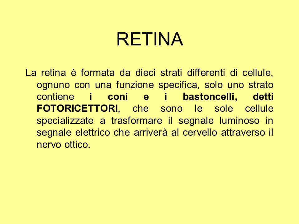 RETINA La retina è formata da dieci strati differenti di cellule, ognuno con una funzione specifica, solo uno strato contiene i coni e i bastoncelli,
