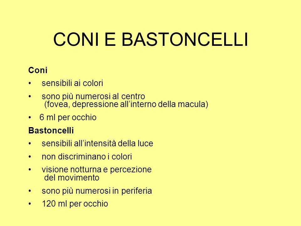 CONI E BASTONCELLI Coni sensibili ai colori sono più numerosi al centro (fovea, depressione allinterno della macula) 6 ml per occhio Bastoncelli sensi