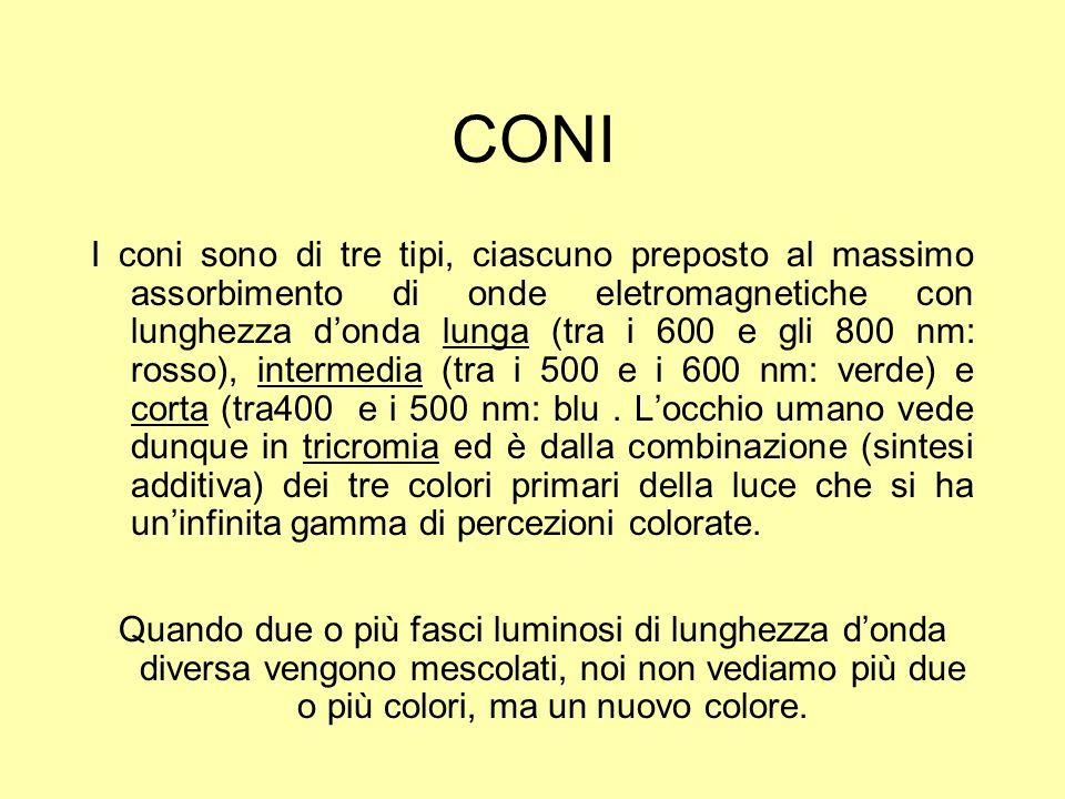 CONI I coni sono di tre tipi, ciascuno preposto al massimo assorbimento di onde eletromagnetiche con lunghezza donda lunga (tra i 600 e gli 800 nm: ro
