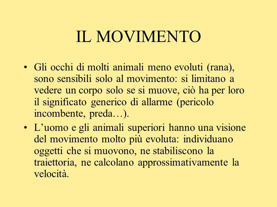 IL MOVIMENTO Gli occhi di molti animali meno evoluti (rana), sono sensibili solo al movimento: si limitano a vedere un corpo solo se si muove, ciò ha