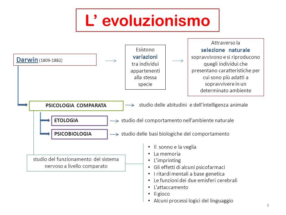 L evoluzionismo 4 Darwin (1809-1882) Esistono variazioni tra individui appartenenti alla stessa specie Attraverso la selezione naturale sopravvivono e