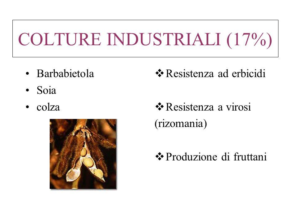 COLTURE INDUSTRIALI (17%) Barbabietola Soia colza Resistenza ad erbicidi Resistenza a virosi (rizomania) Produzione di fruttani