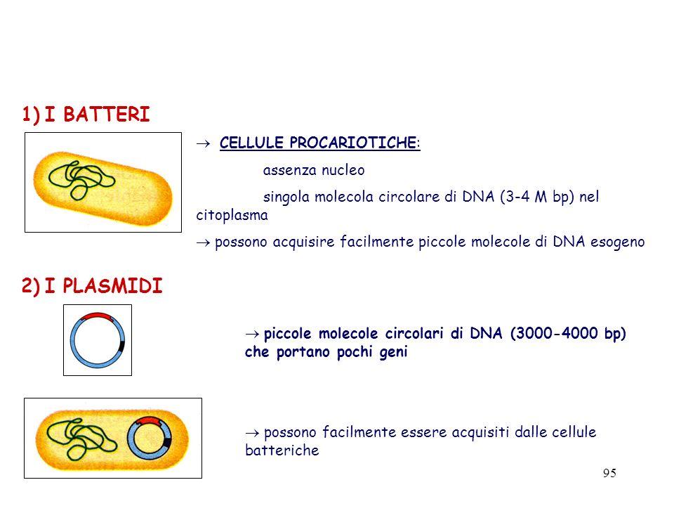 marzo 200495 1) I BATTERI CELLULE PROCARIOTICHE: assenza nucleo singola molecola circolare di DNA (3-4 M bp) nel citoplasma possono acquisire facilmen