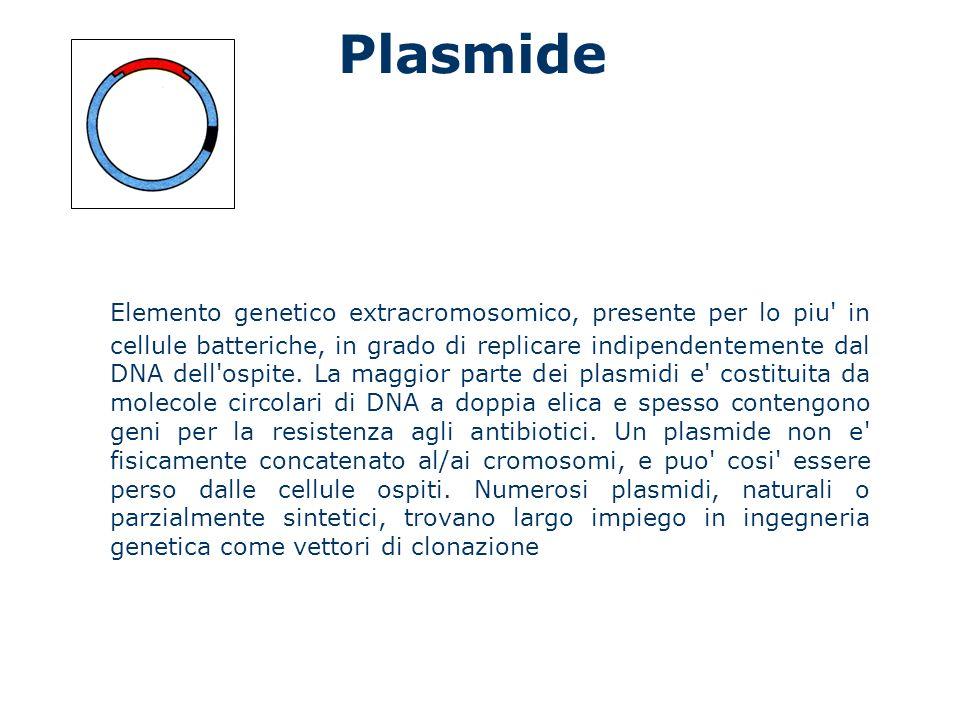 Plasmide Elemento genetico extracromosomico, presente per lo piu' in cellule batteriche, in grado di replicare indipendentemente dal DNA dell'ospite.