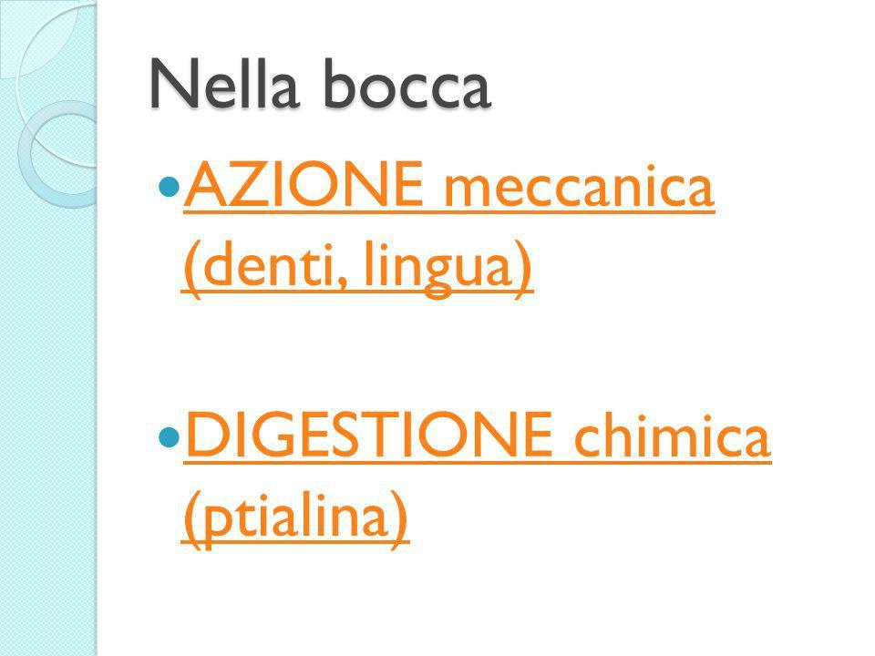 Nella bocca AZIONE meccanica (denti, lingua) AZIONE meccanica (denti, lingua) DIGESTIONE chimica (ptialina) DIGESTIONE chimica (ptialina)