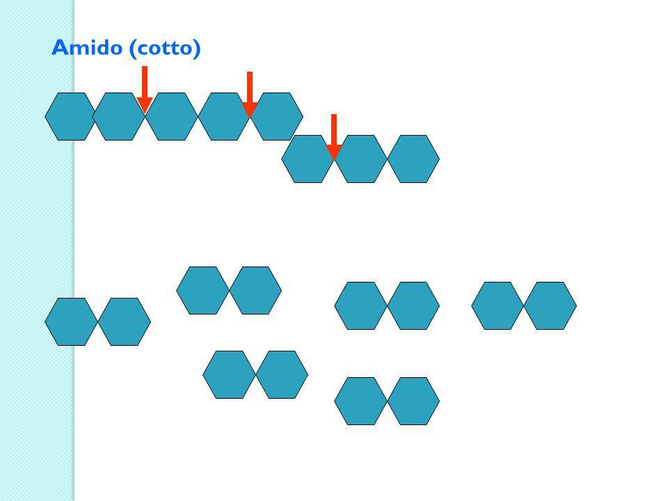 Il cibo MASTICATO nella bocca si trasforma in bolo Le ghiandole salivari secernono la saliva che contiene un enzima la Ptialina che digerisce lamido cotto il bolo attraversa la faringe e lesofago e passa nello stomaco