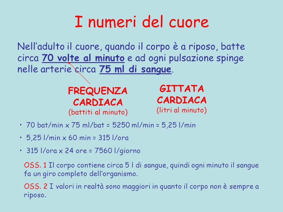 I numeri del cuore Nelladulto il cuore, quando il corpo è a riposo, batte circa 70 volte al minuto e ad ogni pulsazione spinge nelle arterie circa 75 ml di sangue.