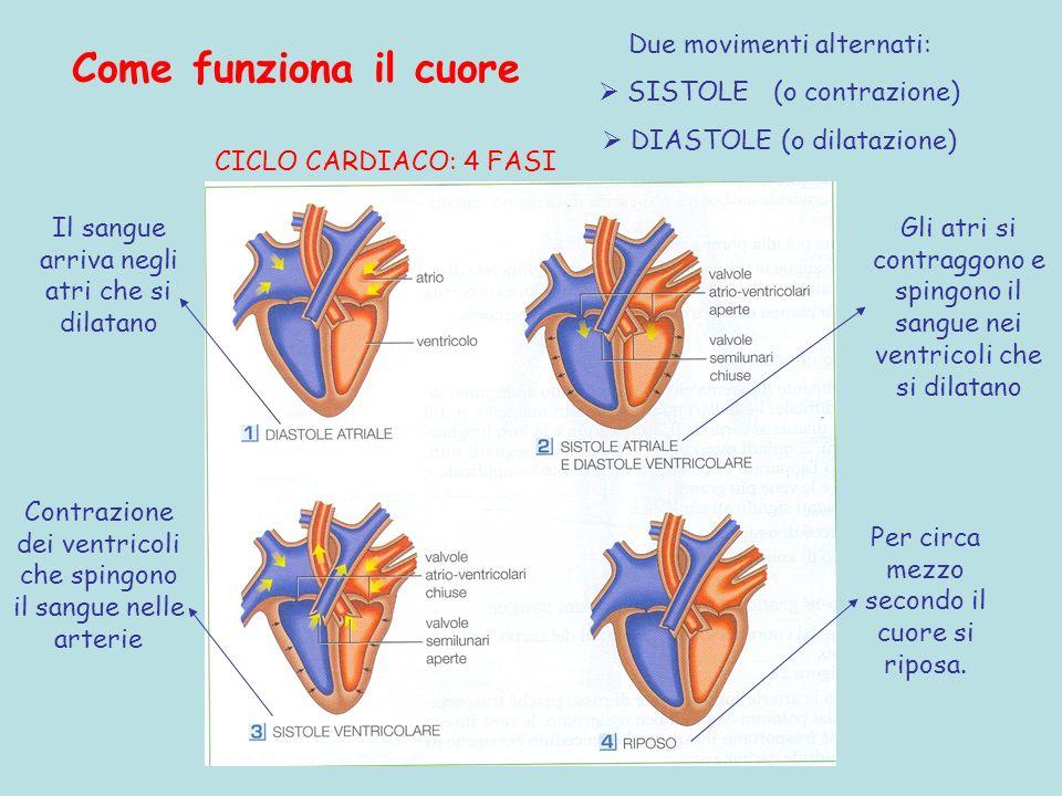 Come funziona il cuore Due movimenti alternati: SISTOLE (o contrazione) DIASTOLE (o dilatazione) Il sangue arriva negli atri che si dilatano Gli atri si contraggono e spingono il sangue nei ventricoli che si dilatano CICLO CARDIACO: 4 FASI Contrazione dei ventricoli che spingono il sangue nelle arterie Per circa mezzo secondo il cuore si riposa.
