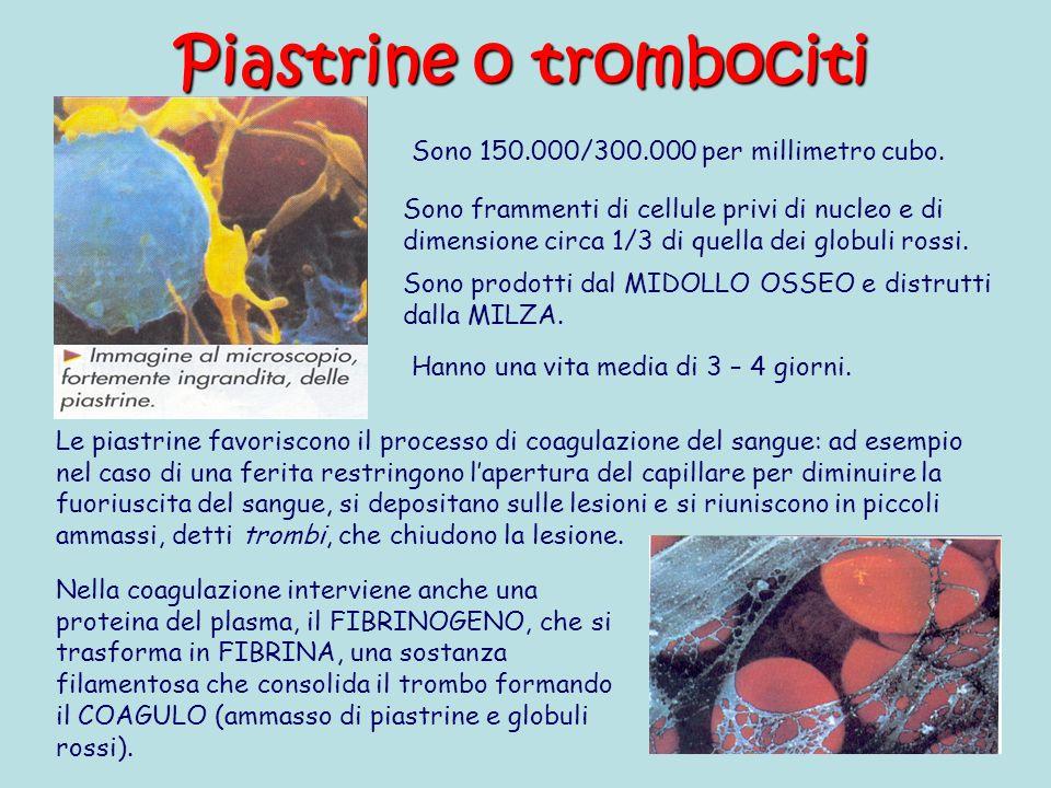 Piastrine o trombociti Sono frammenti di cellule privi di nucleo e di dimensione circa 1/3 di quella dei globuli rossi.