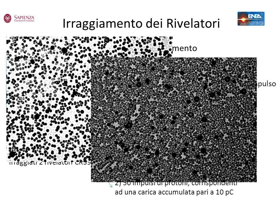 Irraggiamento dei Rivelatori Irraggiati 2 rivelatori CR39 1) 20 impulsi di protoni, corrispondenti ad una carica accumulata pari a 4 pC 2) 50 impulsi