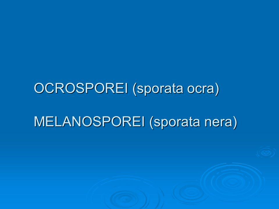 OCROSPOREI (sporata ocra) MELANOSPOREI (sporata nera)