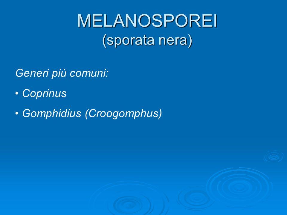 MELANOSPOREI (sporata nera) Generi più comuni: Coprinus Gomphidius (Croogomphus)