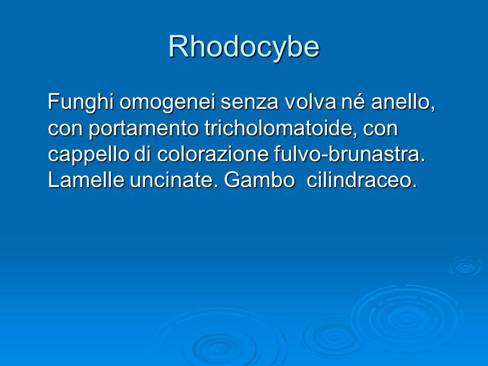Rhodocybe Funghi omogenei senza volva né anello, con portamento tricholomatoide, con cappello di colorazione fulvo-brunastra. Lamelle uncinate. Gambo