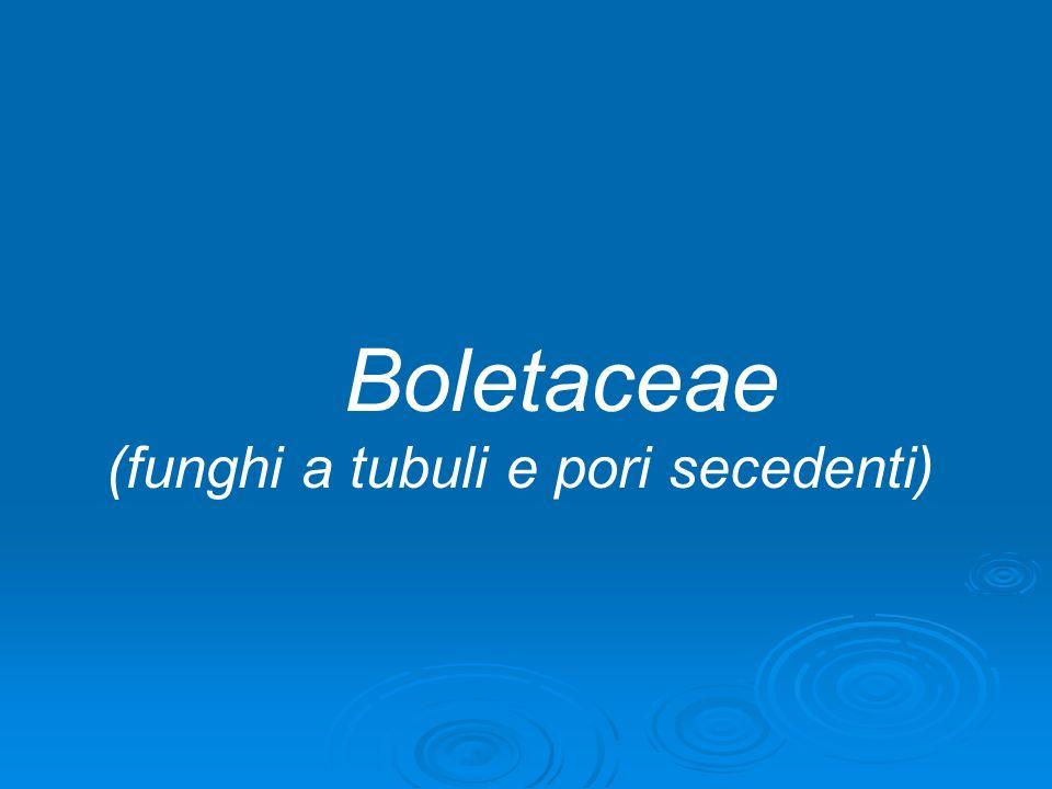 Boletaceae (funghi a tubuli e pori secedenti)