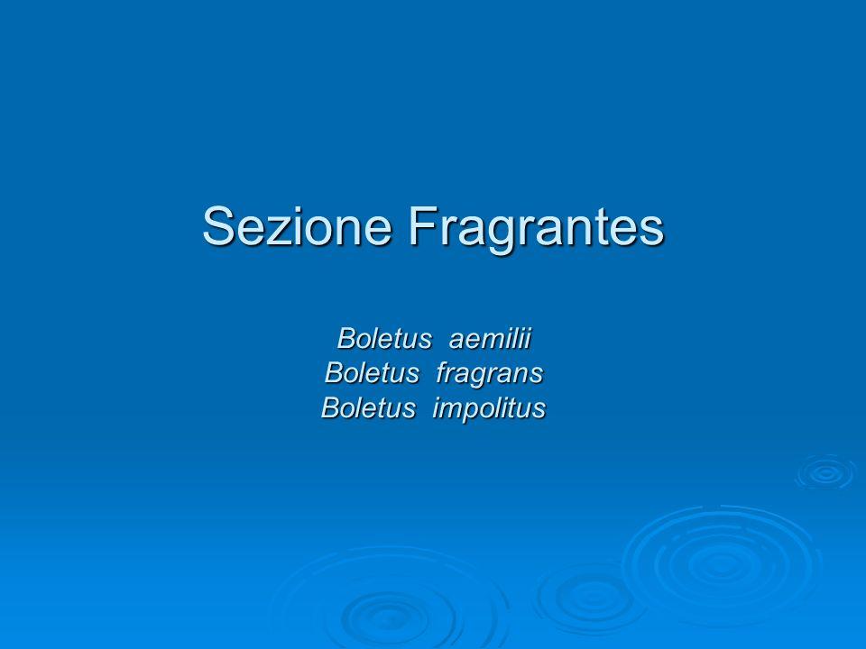 Sezione Fragrantes Boletus aemilii Boletus fragrans Boletus impolitus