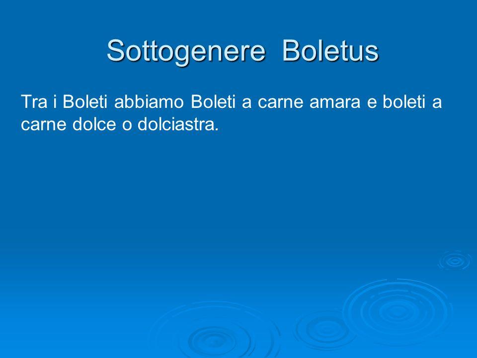 Sottogenere Boletus Tra i Boleti abbiamo Boleti a carne amara e boleti a carne dolce o dolciastra.