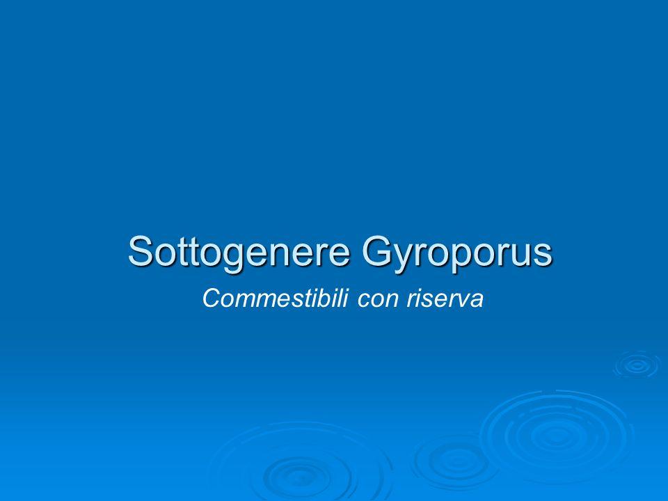 Sottogenere Gyroporus Commestibili con riserva