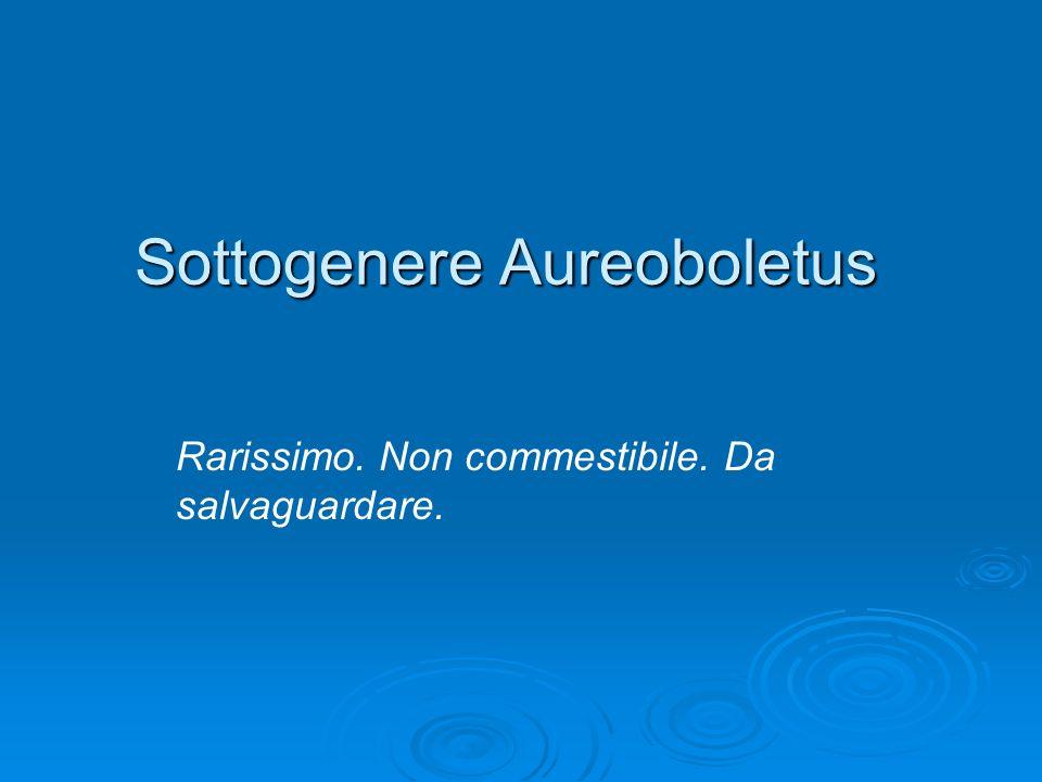 Sottogenere Aureoboletus Rarissimo. Non commestibile. Da salvaguardare.