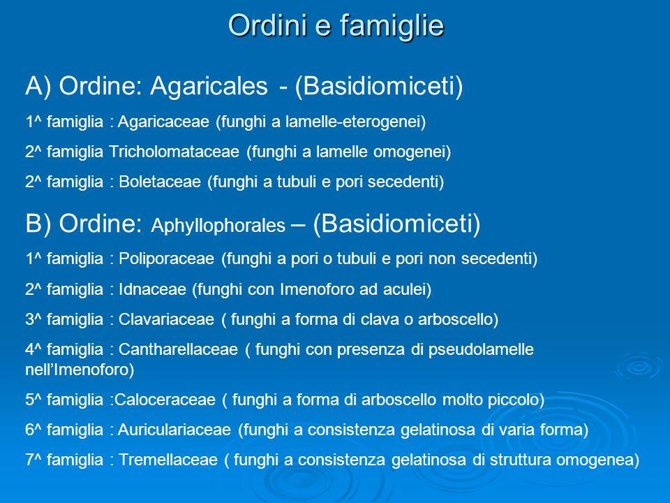 Ordini e famiglie A) Ordine: Agaricales - (Basidiomiceti) 1^ famiglia : Agaricaceae (funghi a lamelle-eterogenei) 2^ famiglia Tricholomataceae (funghi