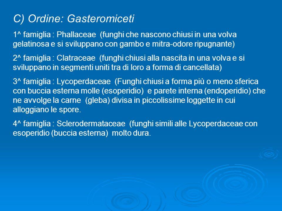 C) Ordine: Gasteromiceti 1^ famiglia : Phallaceae (funghi che nascono chiusi in una volva gelatinosa e si sviluppano con gambo e mitra-odore ripugnant