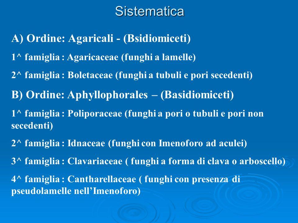 Sistematica A) Ordine: Agaricali - (Bsidiomiceti) 1^ famiglia : Agaricaceae (funghi a lamelle) 2^ famiglia : Boletaceae (funghi a tubuli e pori secede