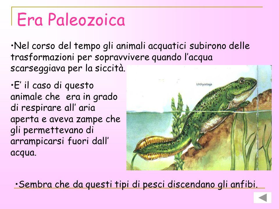 Era Paleozoica Tra gli organismi di questo periodo è importante ricordare il TRILOBITE, di cui sono rimasti resti fossili ben conservati. Corpo molto